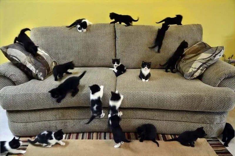 Как сохранить долго хороший вид мебели